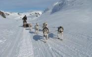 musher-escursioni-cani-da-slitta